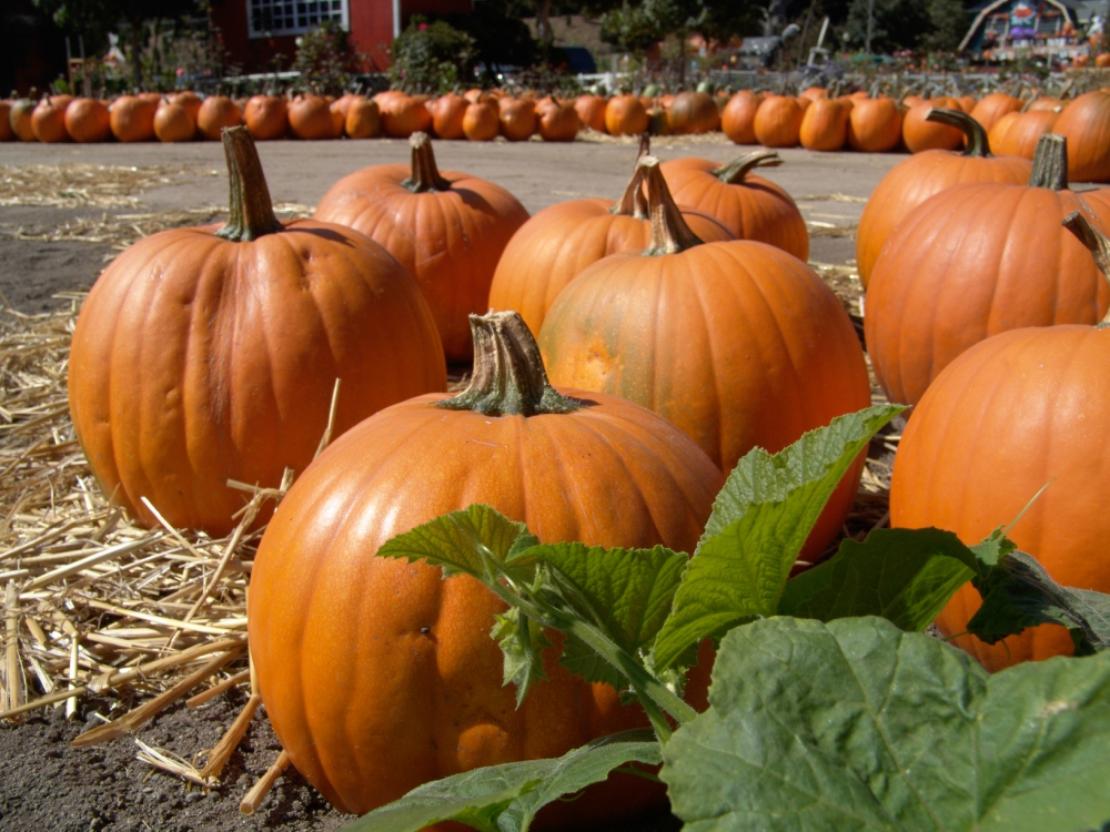 Elderly Care in Bellevue NE: How Autumn's Signature Food Boosts Senior Health